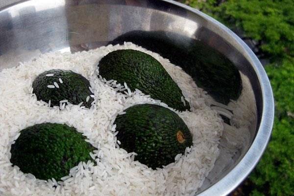 gạo giúp làm trái cây chín