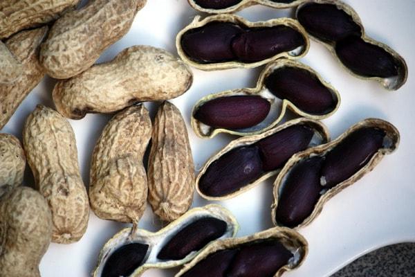 Hình hạt đậu phộng