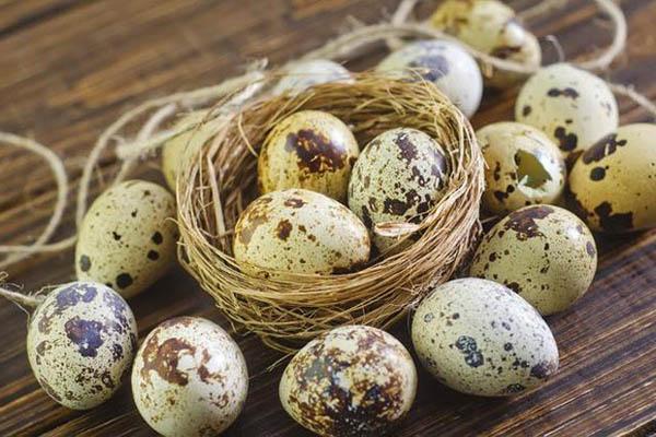 Hình trứng cút